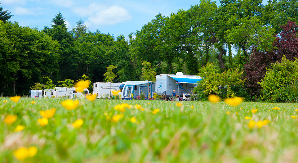 A wooded campsite for a family holiday